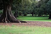 stock photo of royal botanic gardens  - A stunningly beautiful tree trunk in a serene setting - JPG