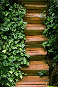 foto of quaint  - A quaint wooden staircase in a lush garden - JPG