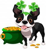 picture of saint patrick  - Illustration of cute Boston Terrier celebrates Saint Patrick Day - JPG