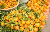 image of valencia-orange  - oranges freshly collected on a wooden box