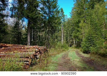 Roadside Timber Stack At Spring