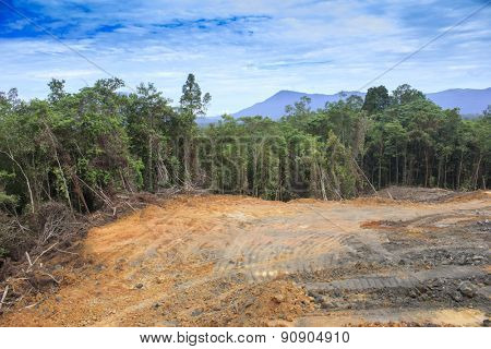 Deforestation environmental problem as rain forest jungle destroyed for human development