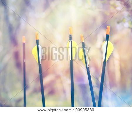 Bow Arrows Sport archery concept summer