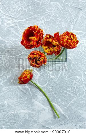 Beautiful bright tulips in glass vase on grey background