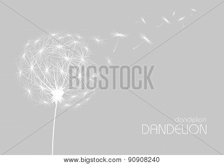 Abstract Background With  Flower Dandelion