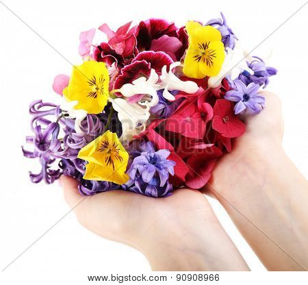 Hands holding bright flowers isolated on white