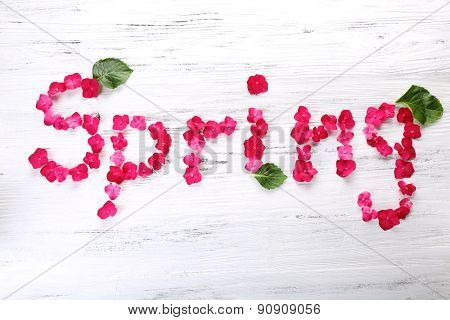Word SPRING from pink petals of fresh hydrangea on wooden background