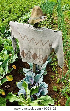 Scarecrow On A Field
