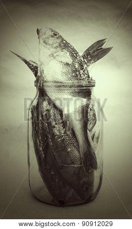 three fish and glass jar
