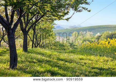 Countryside landscape at the morning  -  Flowering trees, green grass and beautiful valley panorama, spring