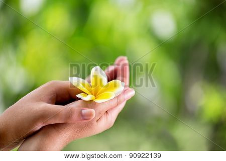 closeup of female hands holding a tropical flower frangipani