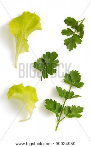 fresh parsley and salad leaf isolated on white background