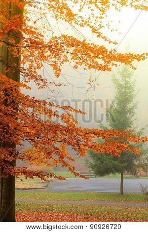 Misty Autumn Park In Foggy Day