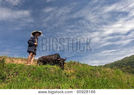 MAY 23, 2010 - GUANGXI,CHINA: An identified farmer takes his bull to feed after the morning work on the terraced rice fields in Long Ji, China. Farming is a major source of income for the people here.
