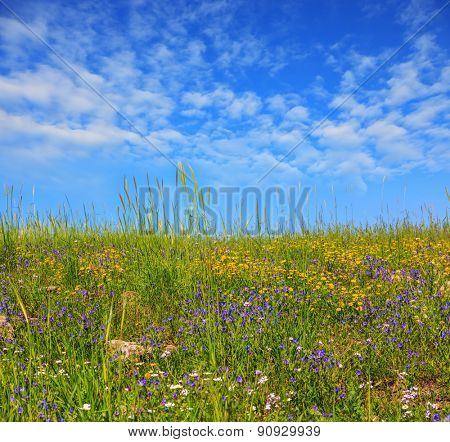Gentle hills covered with a carpet of wild flowers. Spring flowering Golan, Israel