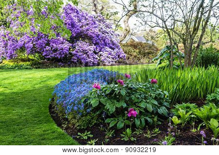 Beautiful botanic garden in Spring. Beautiful Corydalis Flexuosa in full bloom close up