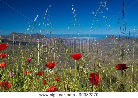 Gran Canaria, Central Regions, Spring