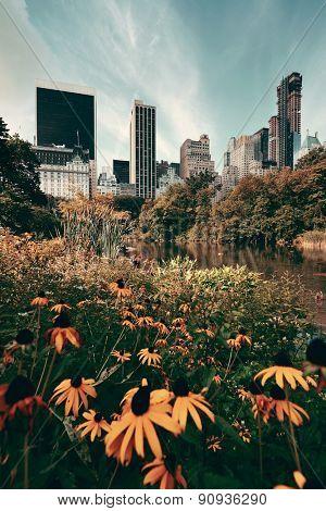 Central Park Spring flower with skyline in midtown Manhattan New York City