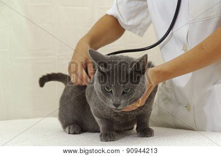 Cat And Woman Doctor Wearing Stethoscope