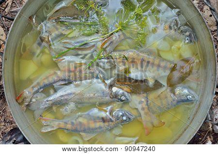 Fresh Fish-soup