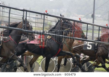 Harness Race-1