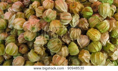 The group of Cape gooseberry or Physalis peruviana. which grow in Thailand