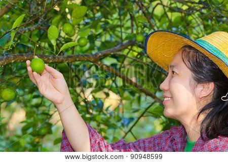 Female Agriculturist Hand Holding Fresh Lemon