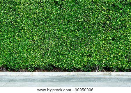 Decorative Garden On A Concrete Floor