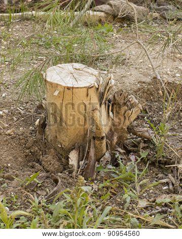Among the rare grass Stump