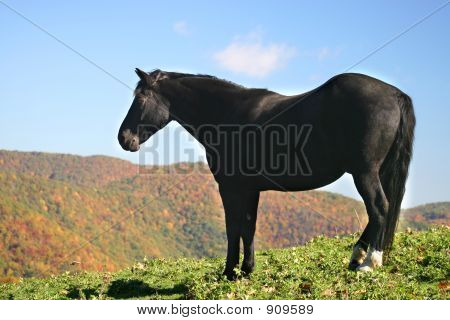 Black Horse On Mountain Top