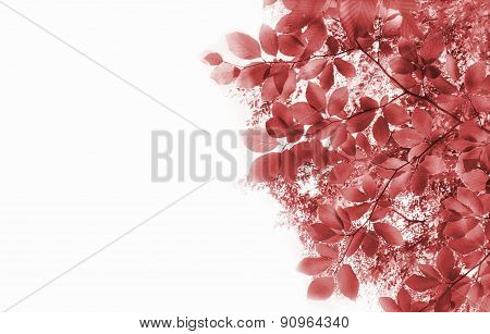 Abstract Background With Red Leaves