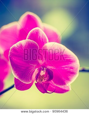 Vintage Photo Of Pink Orchid Flower