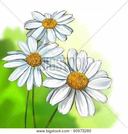 daisy vector illustration  hand drawn  painted