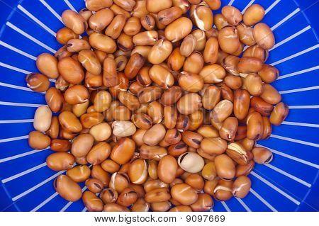 Faba Or Fava Beans