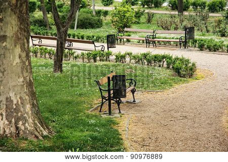 City Park With Benches And Sycamore Tree