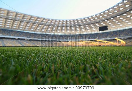 Young Grass In A Football Stadium