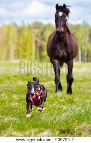 dog running away from a horse