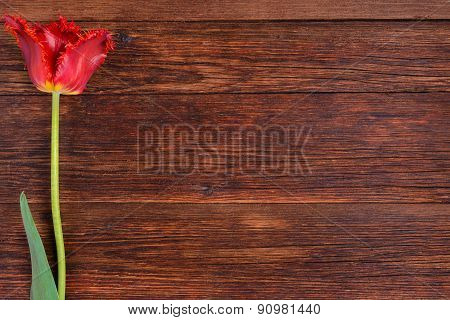 Red Tulip Flower On Wooden Table Background With Copy Space.