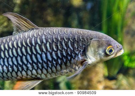 Exotic Coral Fish In Aquarium