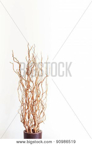 Vase With Dry Branches On White