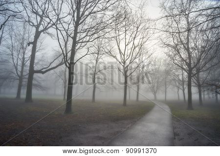 Early Misty Morning