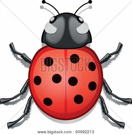 Lady bug insect - Illustration