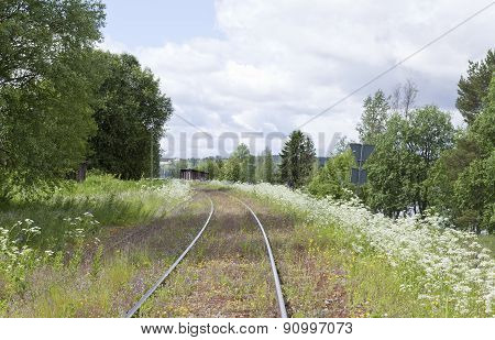 Railway, railroad tracks and flowers.