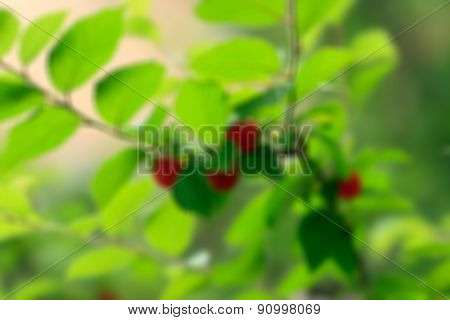 Blurried Cherries On A Tree