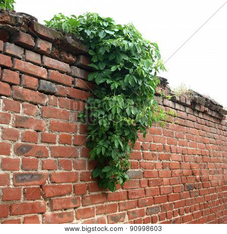Stone Wall Of The Old Brick