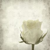 foto of pale  - textured old paper background with pale yellow rose flower - JPG