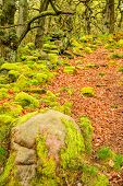 stock photo of contortion  - Stock image of pathways through old twisted gnarly trees and moss covered rocks