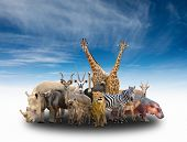 image of eland  - group of africa animals with blue sky - JPG