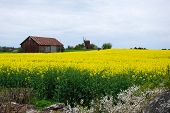 foto of red barn  - Yellow landscape with a red barn and windmill - JPG