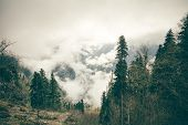 picture of coniferous forest  - Coniferous Forest with cloudy Mountains Caucasus beautiful landscape moody weather colors - JPG